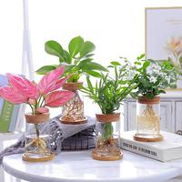 桌面创意水培植物玻璃花瓶透明简约水生养植物绿萝容器桌面插花瓶