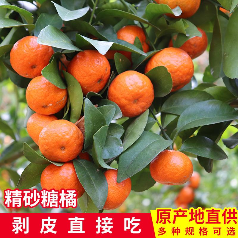 广西砂糖橘新鲜当季水果蜜桔橘子现摘现发整箱净重5斤酸甜薄皮桔