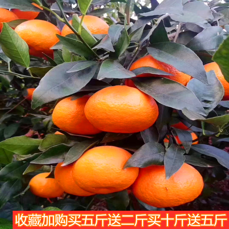 Yunnan Dali Binchuan Mandarin is not the emperor of Guangxi