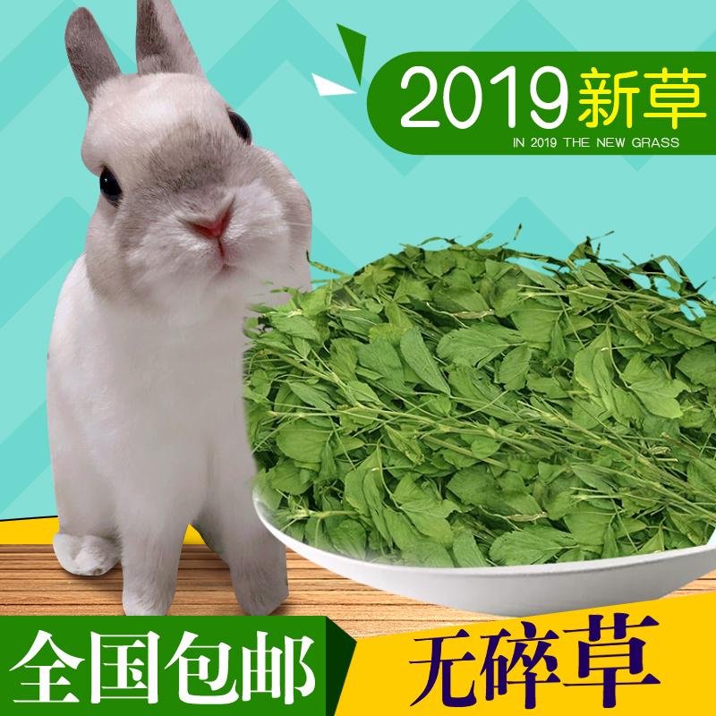 紫花苜蓿草干草饲料幼兔兔子草龙猫