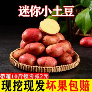 云南小土豆新鲜10斤红皮黄心迷你土豆现挖马铃薯农家蔬菜包邮