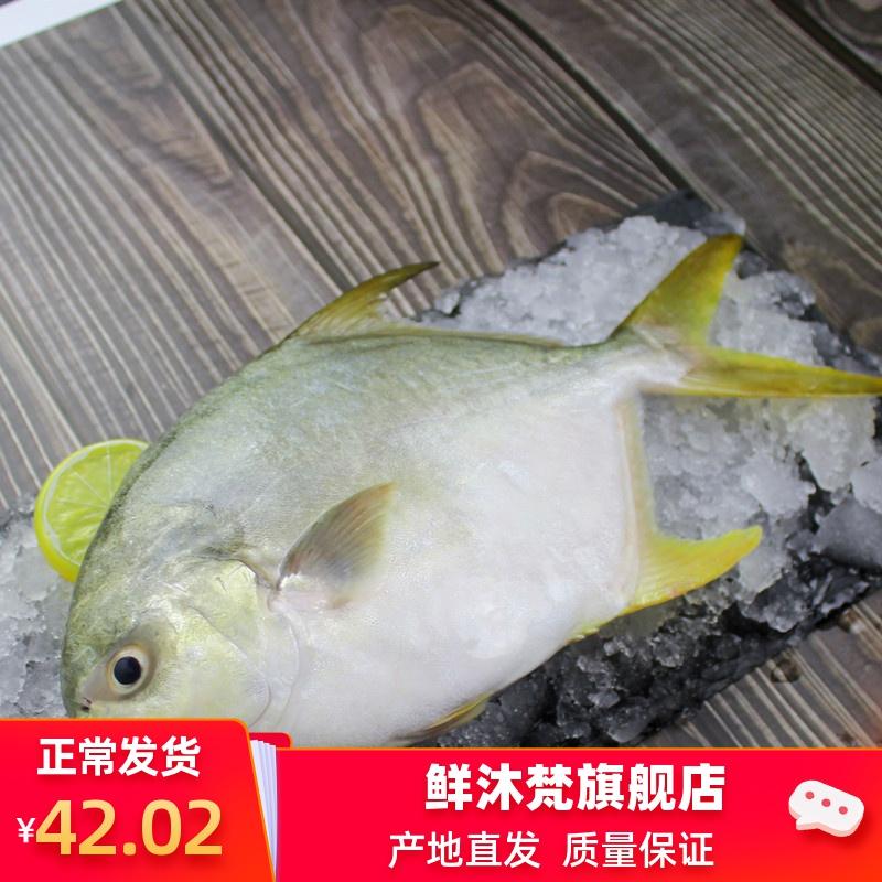 鲜活金昌鱼广东新鲜海捕鲳鱼湛江特产海鲜大仓鱼冷冻水产3条包邮