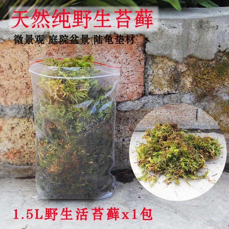 生のコケの造景はもっぱら小さい景観diyアイデアのミニ植物のコケの盆栽の築山を作って店の面を飾ります。