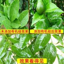 农用有机硅 除草必加 高渗透增效剂苗前苗后玉米除草剂草甘膦助剂