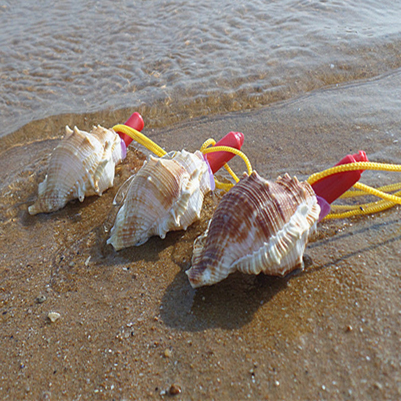 海螺贝壳螺号能吹响海螺的儿童玩具工艺品五两个全国是真的