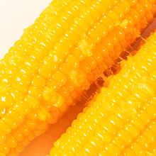 整箱10棒东北黄糯玉米新鲜现摘粘黏甜真空袋装非转基因肥减餐即食