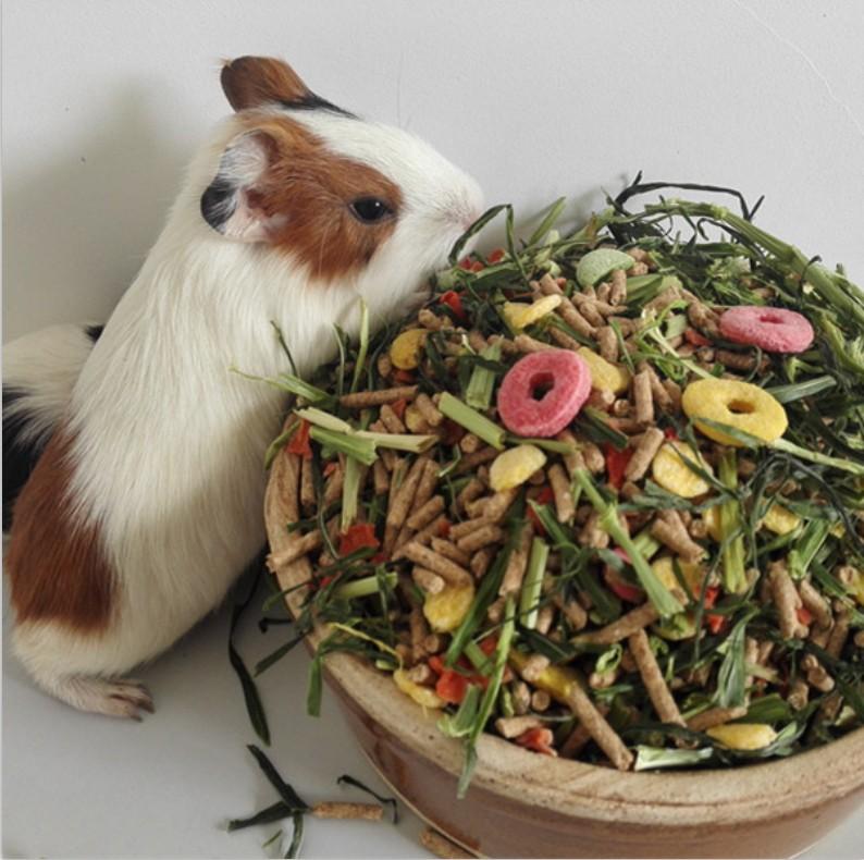 荷兰猪饲料豚鼠粮食兔粮包邮成兔垂