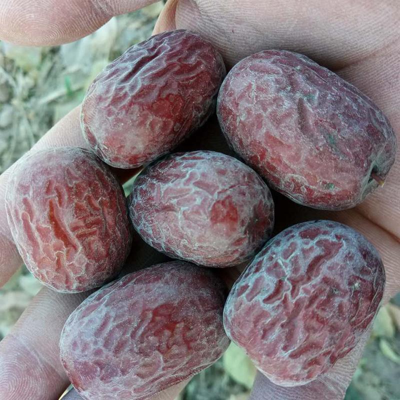 新貨5斤新疆若羌灰棗原生態自然吊干帶土紅棗非和田大棗孕婦零食
