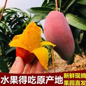 网红彩虹芒果海南贵妃芒5/10斤新鲜当季水果甜心应季台芒整箱包邮