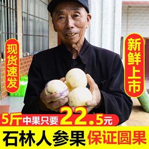 【5斤装】云南石林新鲜人参果圆果当季水果