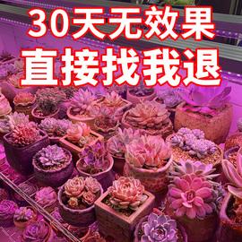 晚立雪多肉补光灯上色全光谱LED植物生长灯家用花卉室内仿太阳光