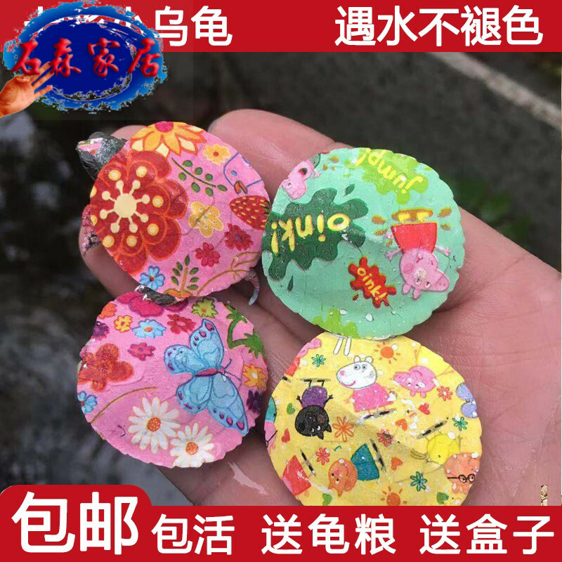 Colorful little tortoise live life color drawing small pet attracting money size colorful pet stall manufacturer living colorful