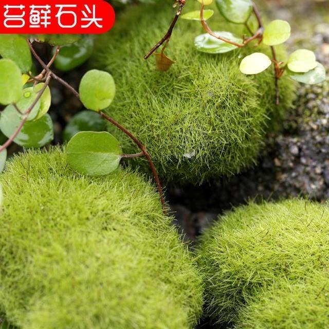 人造真青苔盆景铺面假苔藓装饰草皮石头微景观造景塑料草坪垫