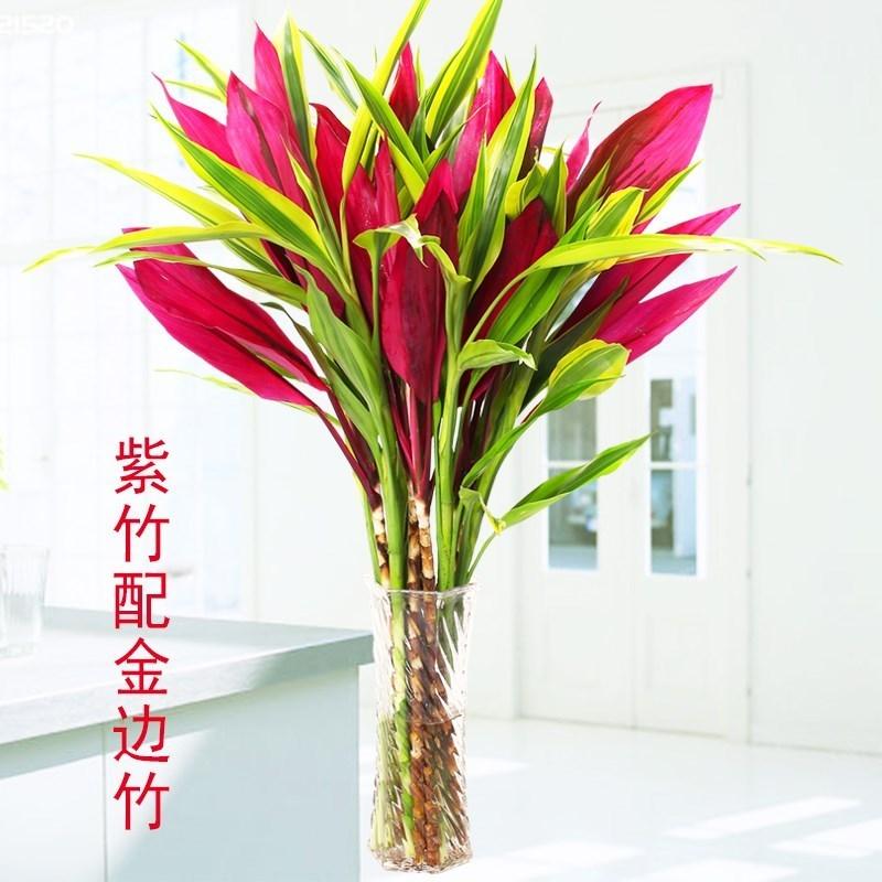 富贵竹水培植物包邮客厅室内转运竹紫株蕉龙竹净化空气水养盆栽