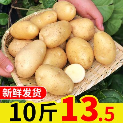 土豆10斤新鮮黃心小土豆農家自種現挖現發新鮮蔬菜山東馬鈴薯包郵