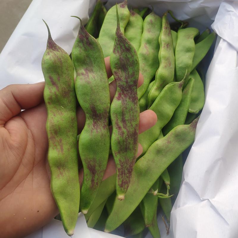 新鲜现摘油豆角一点红豆角东北无筋大宽豆角蔬菜新鲜芸豆菜豆5斤