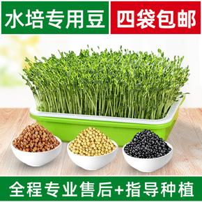 小麦种豆芽发芽盆无水培蔬菜土栽培蔬菜设备豆苗家庭种植盘育苗盘