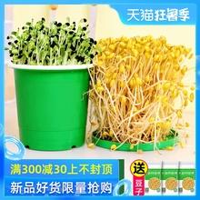 生豆芽机家用全自动发豆芽神器罐家庭自制桶豆牙发牙菜商用大容量