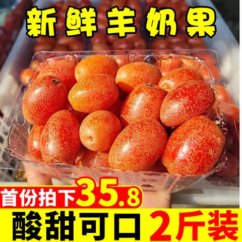 云南新鲜羊奶果2斤当季现摘现发酸甜农家水果牛奶果整箱批发包邮
