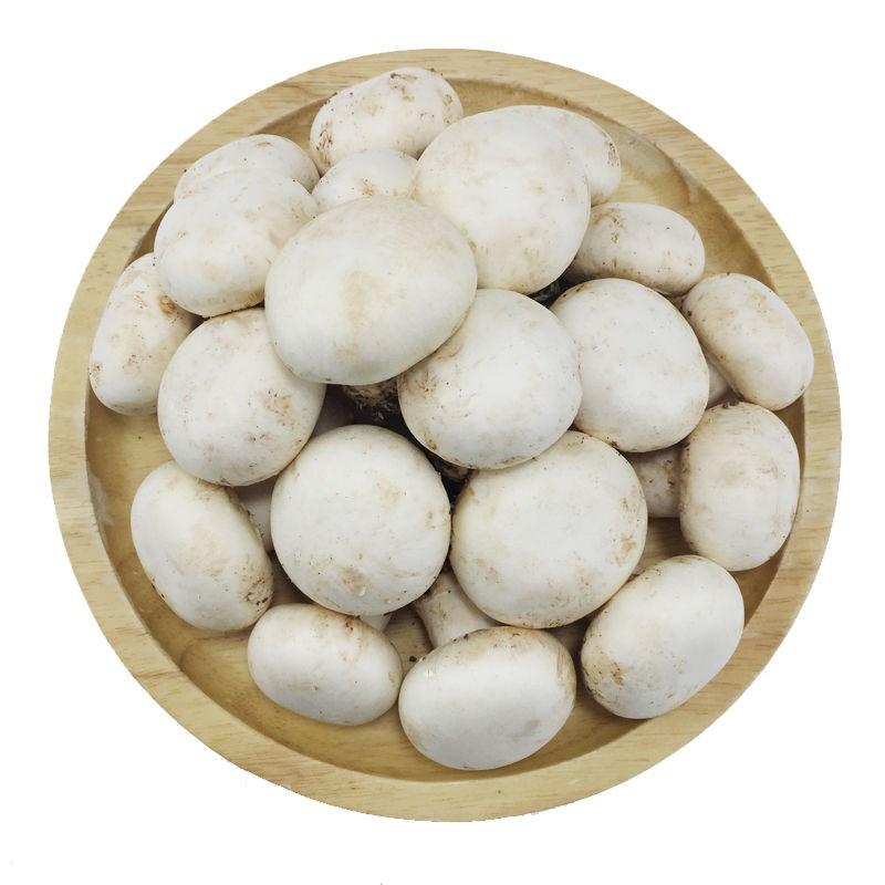 2斤口蘑新鲜口菇白蘑菇口磨菇双孢菇鲜菌菇菌子食用肉厚基地采摘