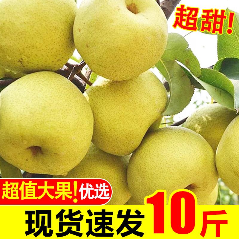 现摘梨子新鲜10斤包邮整箱当季水果汤山梨应季砀山梨皇冠酥梨脆甜