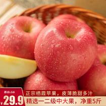 广兴果园正宗烟台红富士栖霞苹果山东新鲜孕妇水果一级果整箱5斤