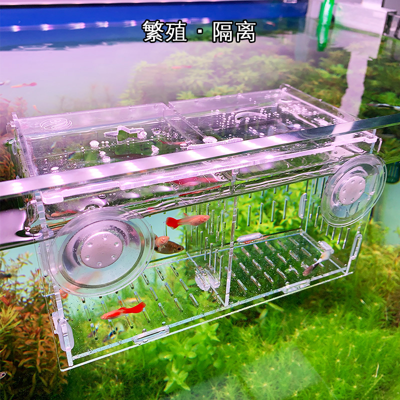 Fish tank isolation box guppy breeding box delivery room small fry incubator isolation net acrylic tortoise isolation box