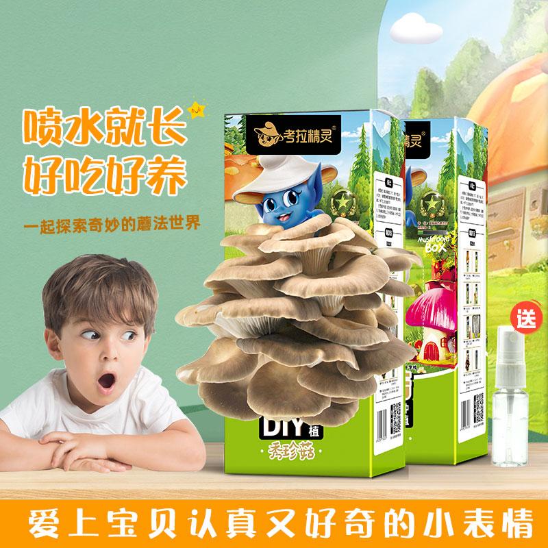 考拉精灵蘑菇种植包盒子2盒装可食用diy菌棒菌种子秀珍菇平菇儿童