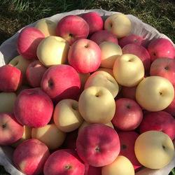 陕西白水有机新鲜脆甜瑞阳瑞雪当季苹果高端礼盒90mm大果送人包邮