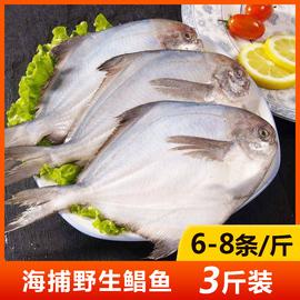 野生银鲳鱼新鲜冷冻 舟山海鲜白鲳鱼东海小鲳鱼3斤装(6-8条/斤)
