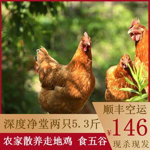老母鸡现杀新鲜2650g走地鸡三黄鸡