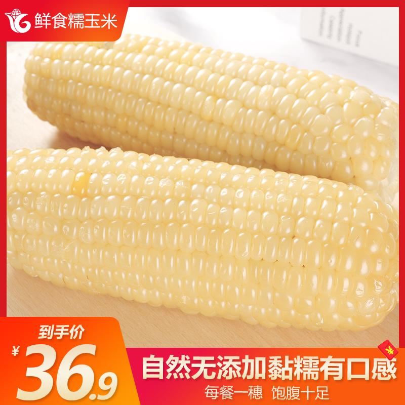 科冠玉米新鲜糯玉米棒真空即粘香甜软食10支非转基因现摘五谷杂粮