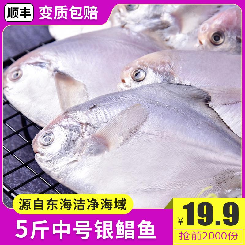 新鲜东海银鲳鱼5斤中号顺丰包邮鲜活冷冻海鲜冰鲜银鲳鱼