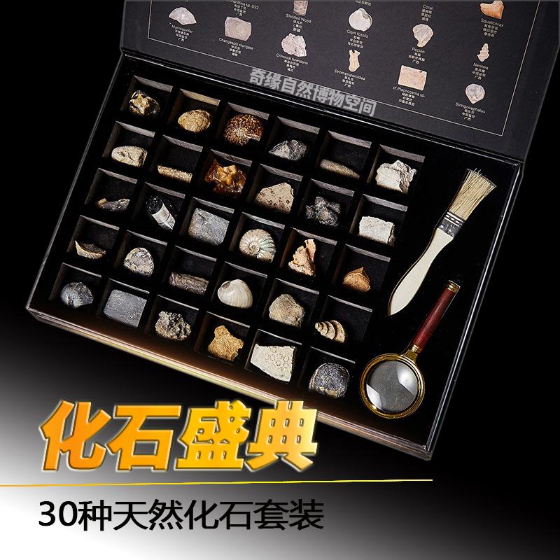 Ископаемые Артикул 640723525865