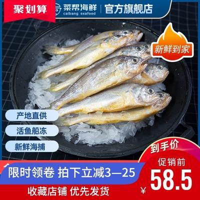 小黄鱼鲜冷冻黄花鱼黄鱼海鱼新鲜舟山小黄花鱼海鲜生鲜鲜活水产鱼