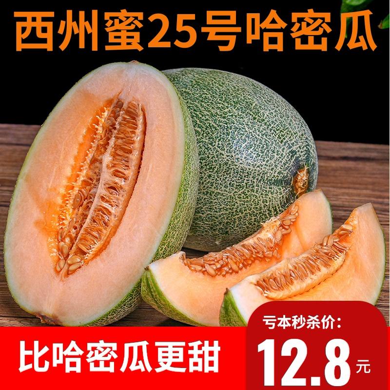 现摘现发新疆哈密瓜5斤西州蜜瓜新鲜水果晓蜜25香甜网纹蜜瓜包邮
