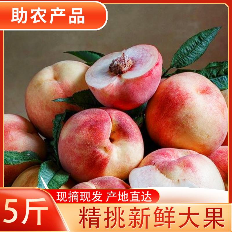 山东冬桃映霜红脆甜桃新鲜孕妇水果金秋红桃雪桃子毛桃大桃5斤10