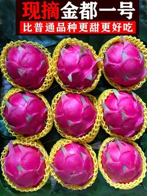 国产辅食广西特产金都一号红心火龙果大果鲜果水果包邮新鲜生鲜