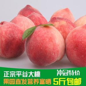5斤包邮正宗平谷大桃子果园直发脆桃北京水蜜桃鲜桃坏果包赔蜜桃