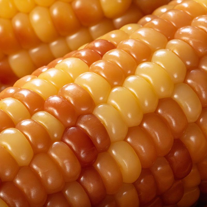 滇东西云南西双版纳香糯小玉米棒真空袋装即食速食甜花包谷煮一箱