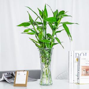 水培植物客厅室内招财四季富贵竹