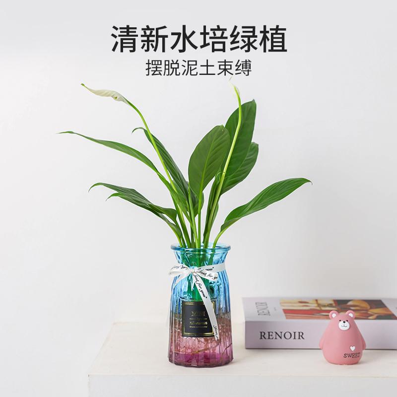 水培水养植物