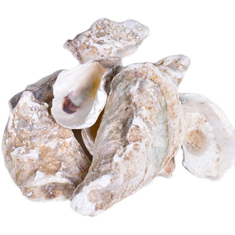 カキのカキ殻の魚の池の天然の濾過材料(コイの池の専用の濾材)の安定ph値はカルシウムの質を増加します。