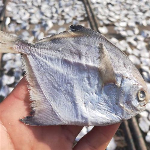 New products of the season: pomfret a dried fish