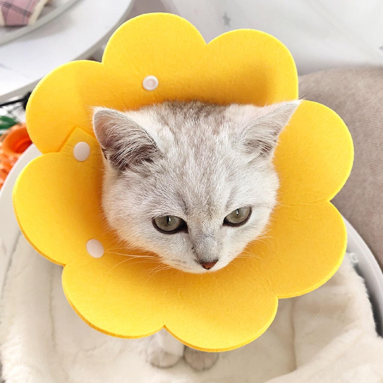 猫咪伊丽莎白圈猫软脖圈狗项圈伊莉莎白伊利沙白防舔头套绝育用品
