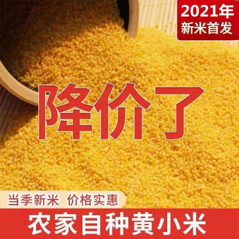 黄小米1斤-5斤装2021年新小黄米小米粥月子米孕妇宝宝米五谷杂粮