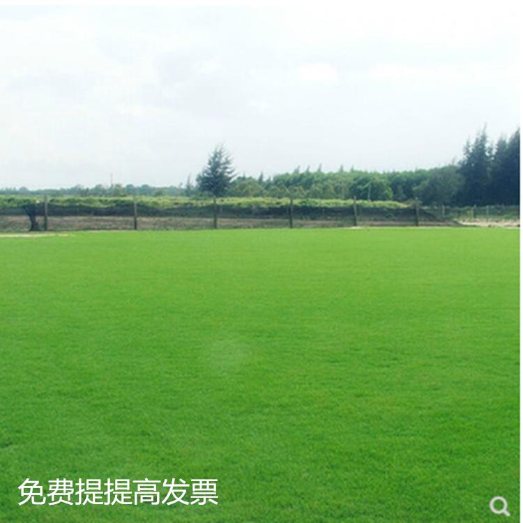 中國代購|中國批發-ibuy99|高尔夫|地毯草种子 高尔夫球场庭院草坪草籽 不修剪四季常青