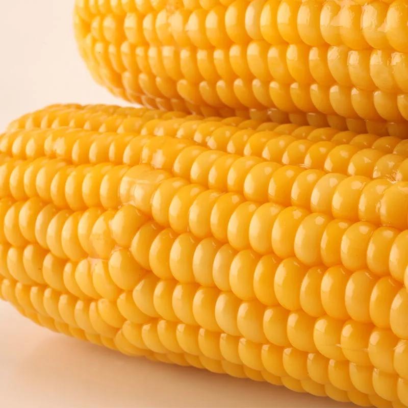 黑龙江省非转基因玉米真空 包装东北保鲜粘苞米甜玉米新鲜 黄玉米