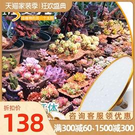 MS麦可士 多肉补光灯 上色全光谱 LED家用兰花卉植物仿太阳生长灯