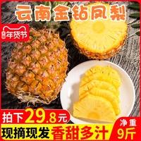 云南金钻凤梨9斤新鲜树上熟当季水果无眼手撕大凤梨菠萝应包邮10